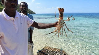cooks with lobster